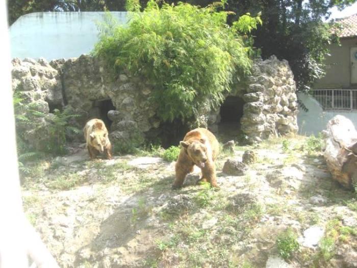 ДЯДО МРАЗ в зоокъта на Варна навръх 22 декември