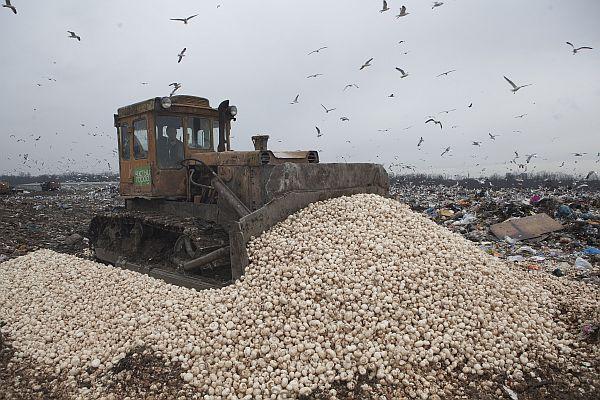 """""""САНКЦИИ"""": Полската продукция - по-евтина от боклука"""