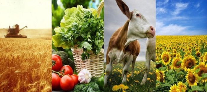 РУСИЯ вече с $ 20 млрд износ на селскостопанска продукция