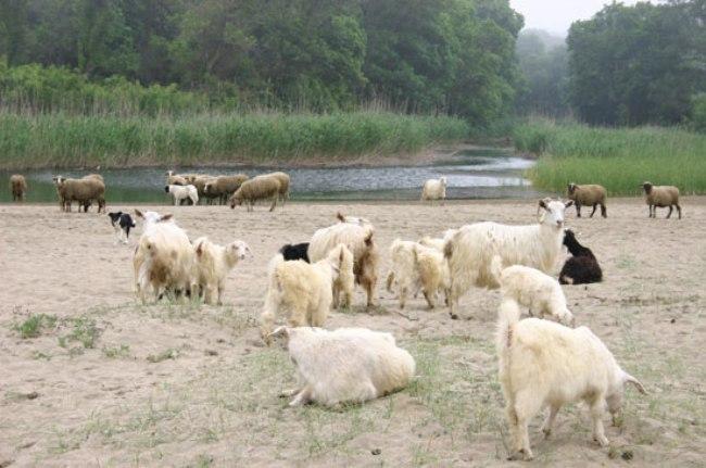 #КОЙ# убива българското животновъдство