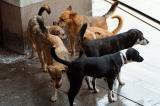 Кучетата на Маринов
