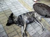 """Варненец насочи пистолет към улично куче, което го задържа в """"плен"""""""